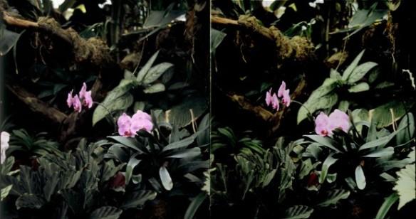 flower-small