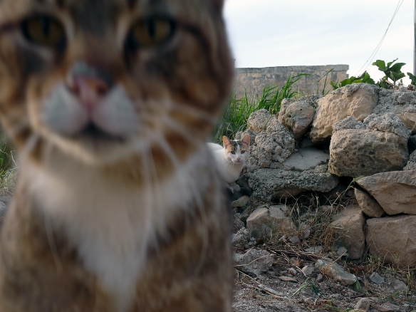 James Casha - A Tale of Two Kitties