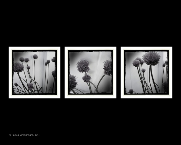 Pam Zimmermann - Black And White Flower Collage