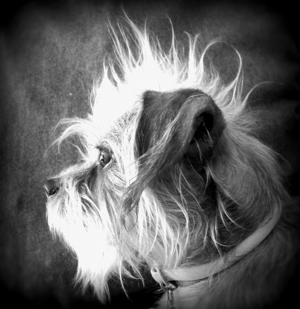 Scott Koelle - Surprised Dog With a Mohawk