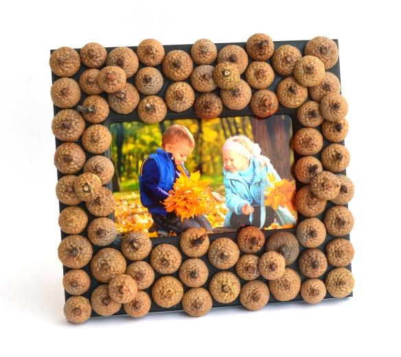 acorn-frame